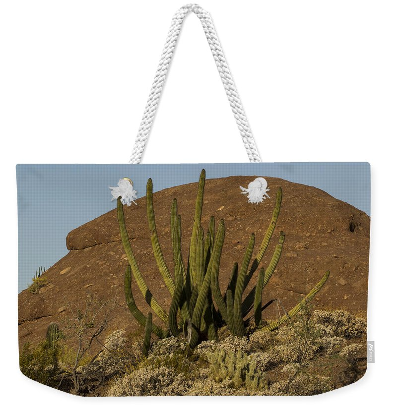Jean Noren Weekender Tote Bag featuring the photograph Organ Pipe Cactus by Jean Noren
