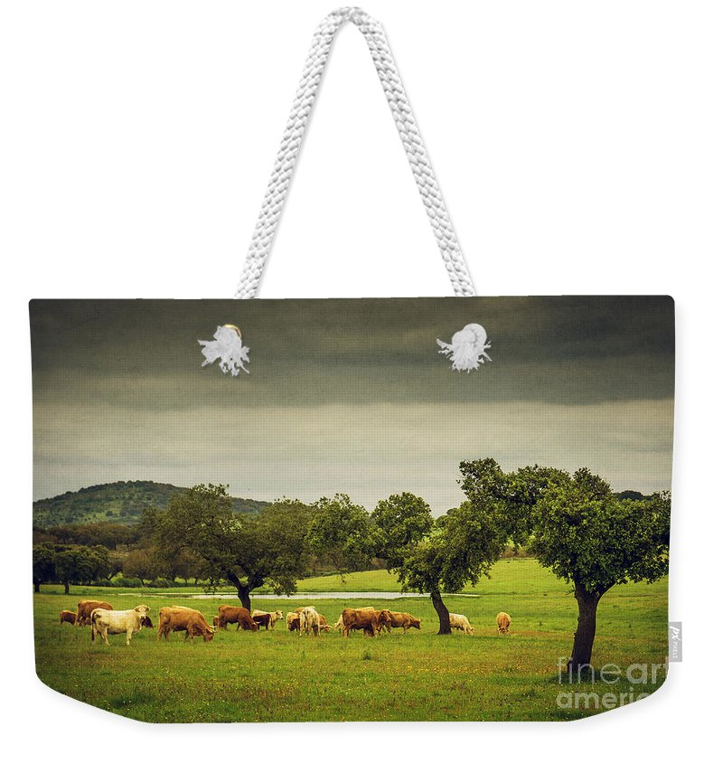Portugal Weekender Tote Bag featuring the photograph Pasturing Cows by Carlos Caetano
