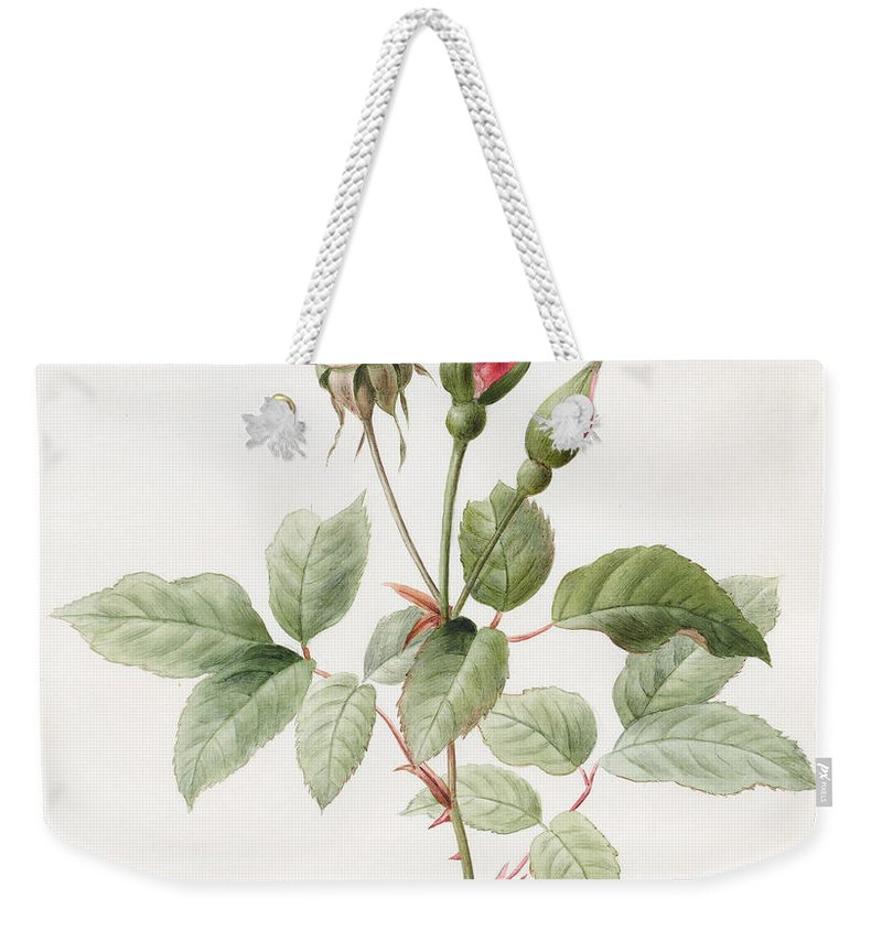 Pink Rose And Buds Weekender Tote Bag featuring the painting Pink Rose And Buds by Louise D'Orleans