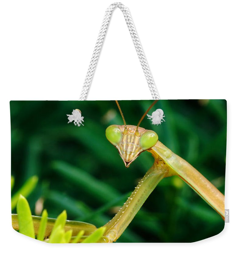 Praying Mantis Weekender Tote Bag featuring the photograph Praying Mantis by George Mattei