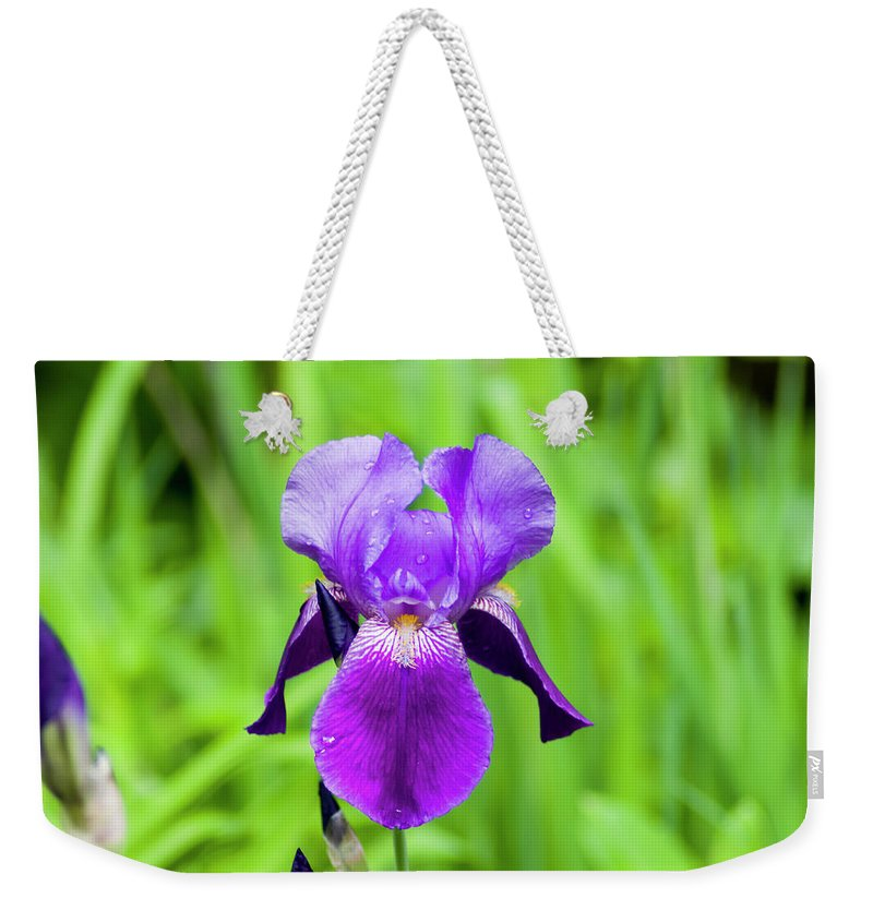 Scorpiris Weekender Tote Bag featuring the photograph Purple Bearded Iris by Bob Corson