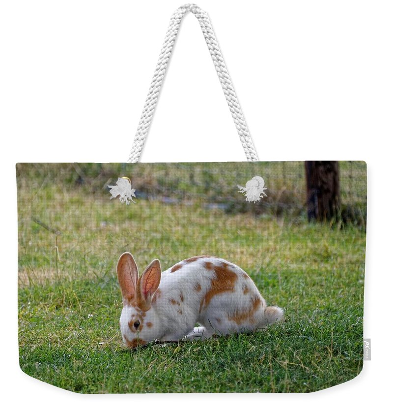 Rabbit Weekender Tote Bag featuring the photograph Rabbit by FL collection
