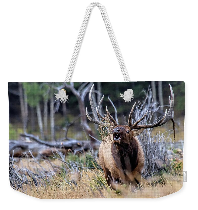Elk Weekender Tote Bag featuring the photograph Raging Bull by Jim Garrison