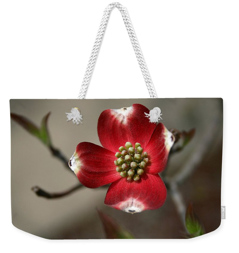 Flower Weekender Tote Bag featuring the photograph Red Dogwood by Andrei Shliakhau