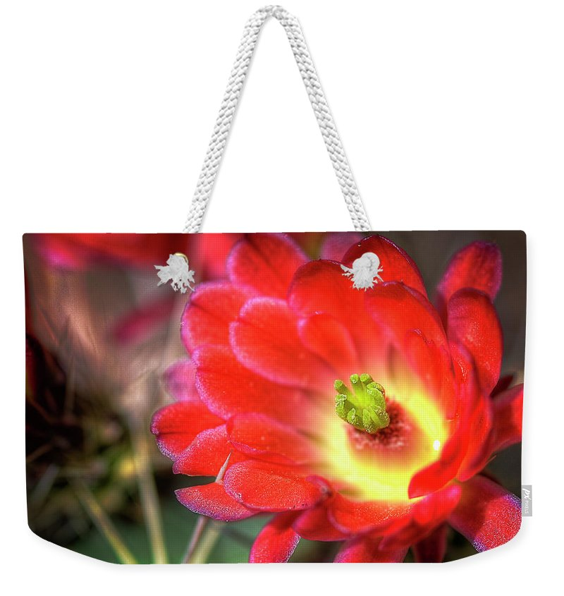 Arizona Weekender Tote Bag featuring the photograph Red Hedgehog by Saija Lehtonen