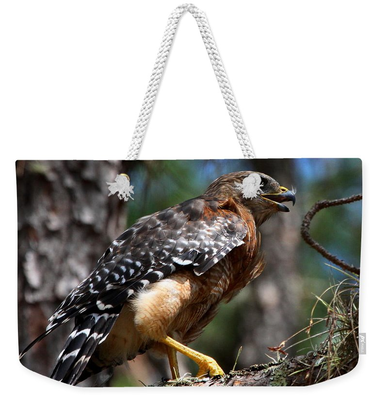 Red Shouldered Hawk Weekender Tote Bag featuring the photograph Red Shouldered Hawk by Barbara Bowen
