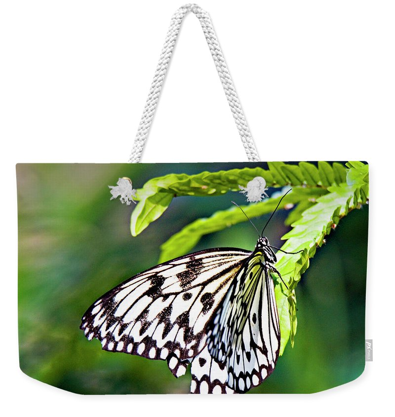 Butterfly Weekender Tote Bag featuring the photograph Rice Paper Butterfly 7 by Walter Herrit