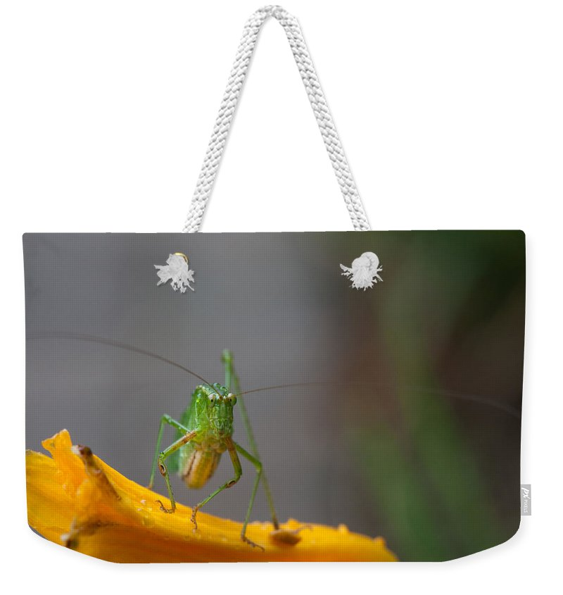Grasshopper Weekender Tote Bag featuring the photograph Right At You by Karol Livote