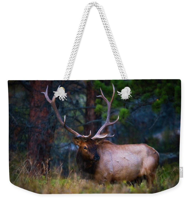 Elk Weekender Tote Bag featuring the photograph Rocky Mountain Elk by Darren White