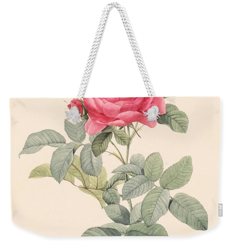 Rosa Weekender Tote Bag featuring the drawing Rosa Gallica Pontiana by Pierre Joseph Redoute