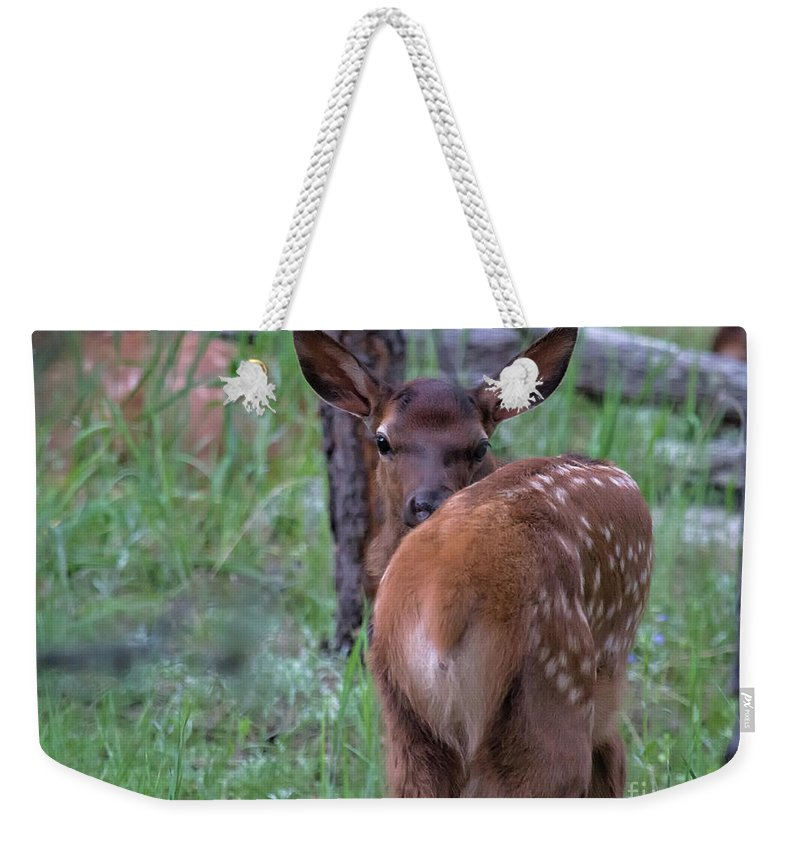Baby Elk Weekender Tote Bag featuring the photograph Rubber Necking by Jim Garrison