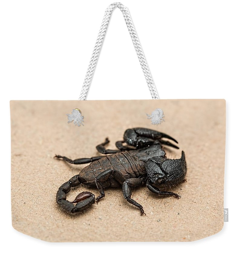 Scorpion Weekender Tote Bag featuring the photograph Scorpion by FL collection
