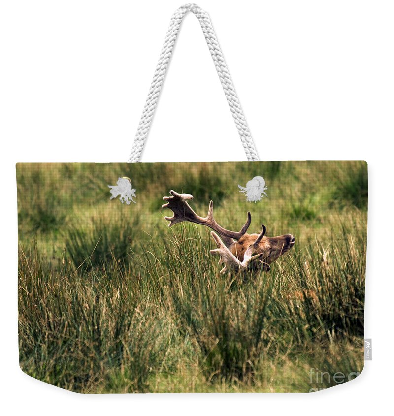 Fallow Deer Weekender Tote Bag featuring the photograph Siesta by Angel Ciesniarska