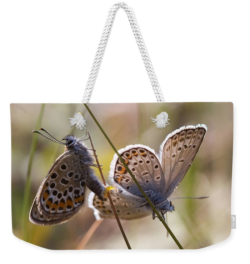 Butterfly Weekender Tote Bag featuring the photograph Silver-studded Blue Butterflies by Bob Kemp