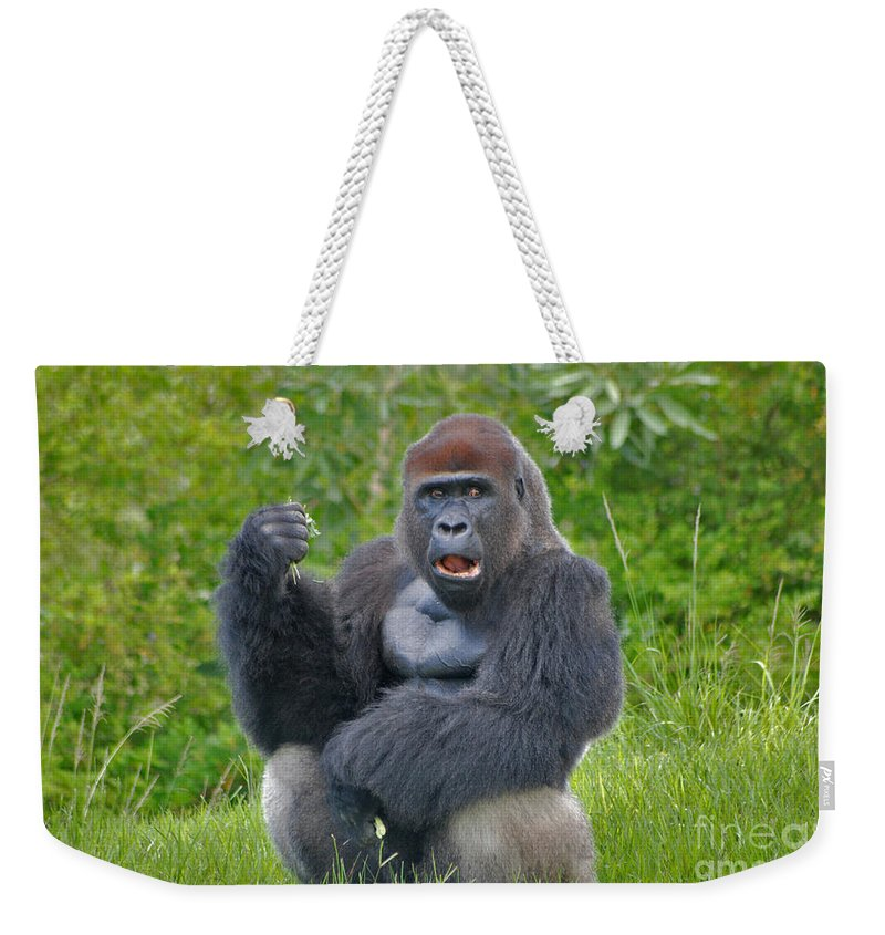 Silverback Weekender Tote Bag featuring the photograph 1- Silverback Western Lowland Gorilla by Joseph Keane