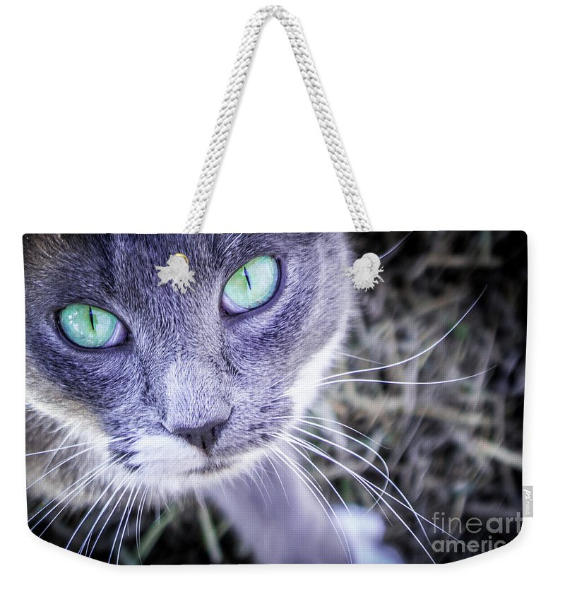 Black Weekender Tote Bag featuring the photograph Skitty Cat by Cheryl McClure