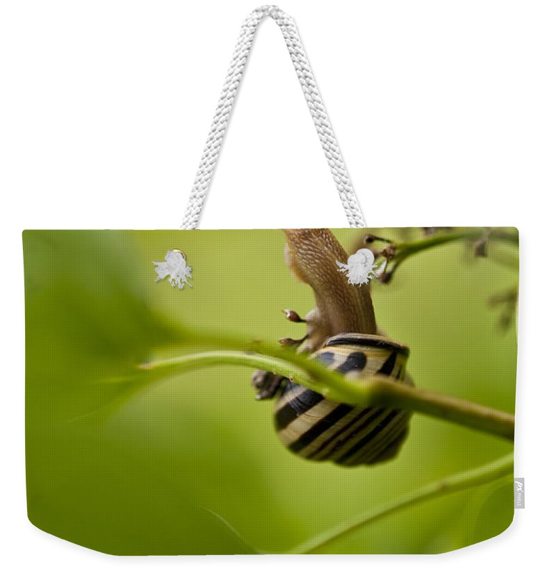 Pacific Northwest Weekender Tote Bag featuring the photograph Snail Stretching by Jim Corwin
