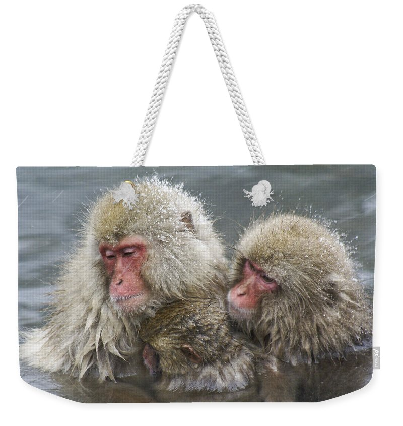 Snow Monkey Weekender Tote Bag featuring the photograph Snuggling Snow Monkeys by Michele Burgess