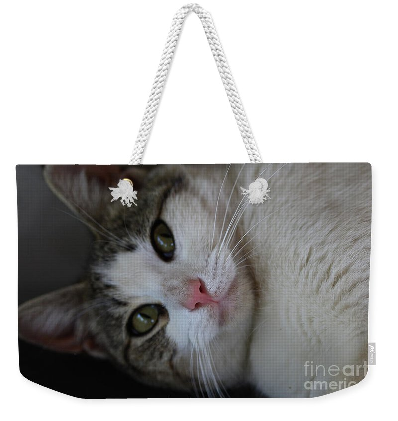Cats Weekender Tote Bag featuring the photograph Soxx by Kim Henderson