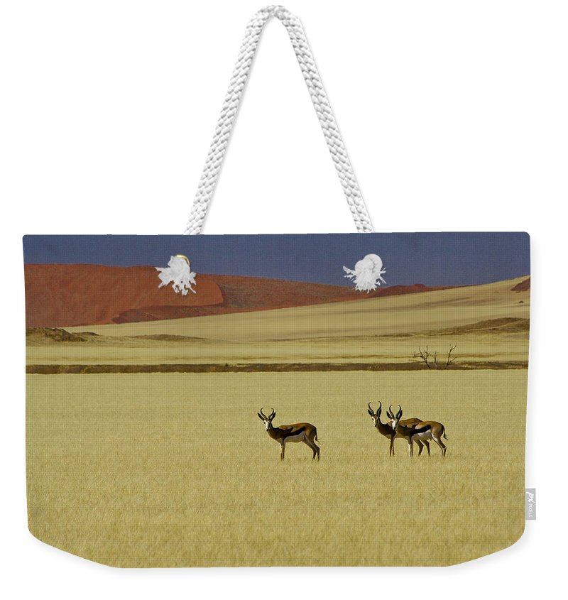 Africa Weekender Tote Bag featuring the photograph Springbok At Sossusvlei by Michele Burgess