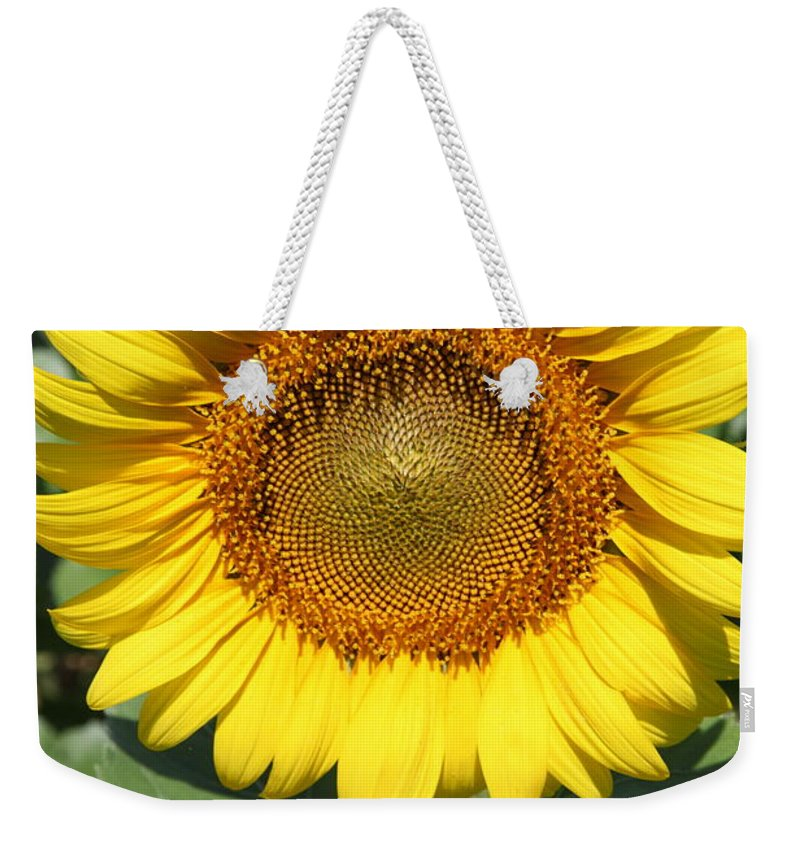 Sunflowers Weekender Tote Bag featuring the photograph Sunflower 09 by Amanda Barcon