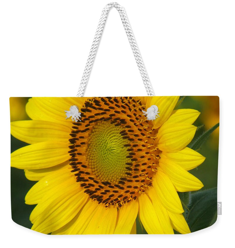 Sunflowers Weekender Tote Bag featuring the photograph Sunflower by Amanda Barcon