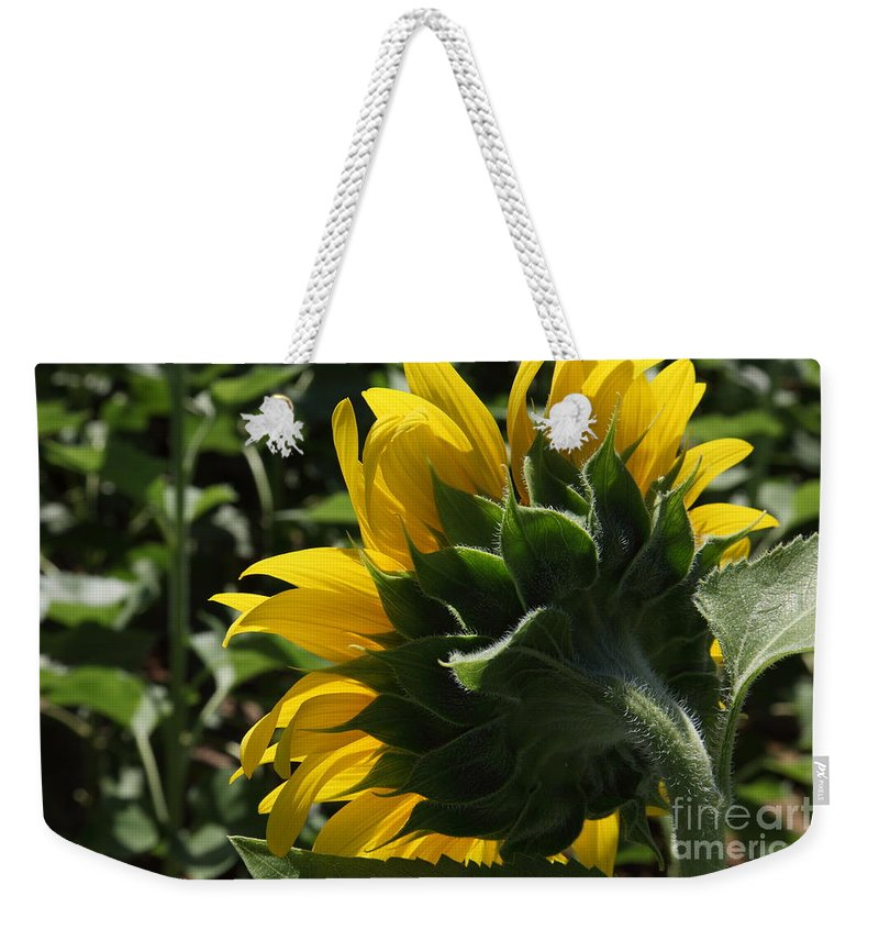 Sunflower Weekender Tote Bag featuring the photograph Sunflower Series 09 by Amanda Barcon