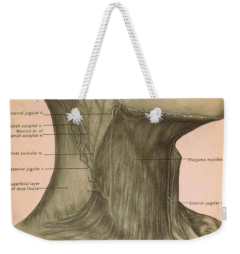 Surgical Anatomy Of The Head And Neck Weekender Tote Bag for Sale by ...