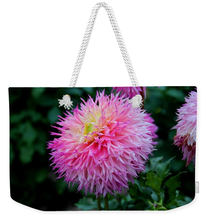 Dahlia Weekender Tote Bag featuring the photograph Sweet Temptation by Michiale Schneider