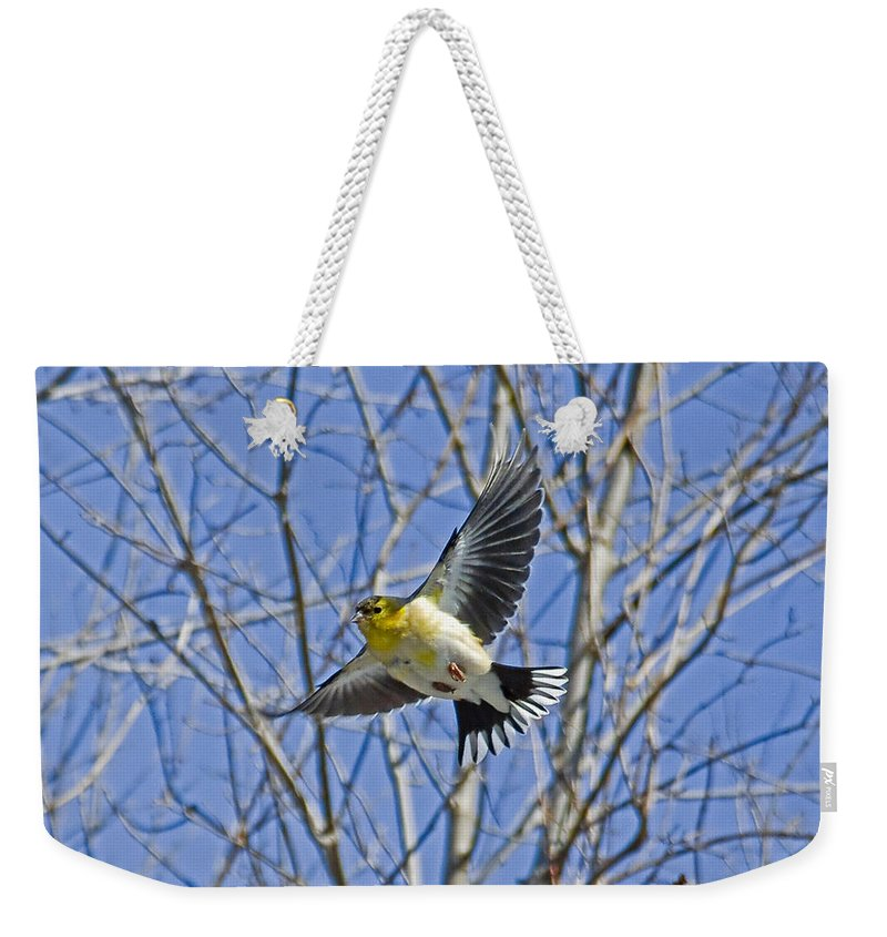 American Goldfinch Weekender Tote Bag featuring the photograph The American Goldfinch In-flight, by Asbed Iskedjian