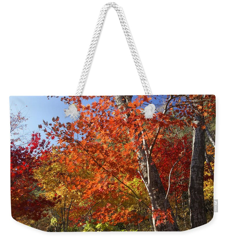 Autumn Weekender Tote Bag featuring the photograph The Colors Of Autumn by Michele Burgess