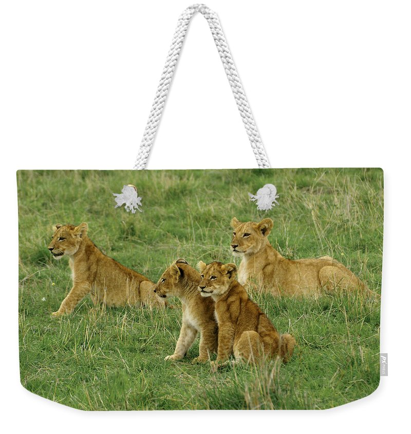 Lion Weekender Tote Bag featuring the photograph The Four Musketeers by Michele Burgess