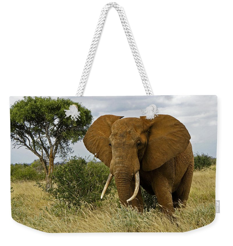 Africa Weekender Tote Bag featuring the photograph The Old Bull by Michele Burgess