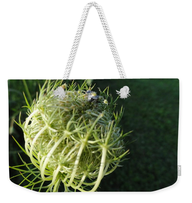 Weekender Tote Bag featuring the photograph The Queen Is Home by Trish Hale