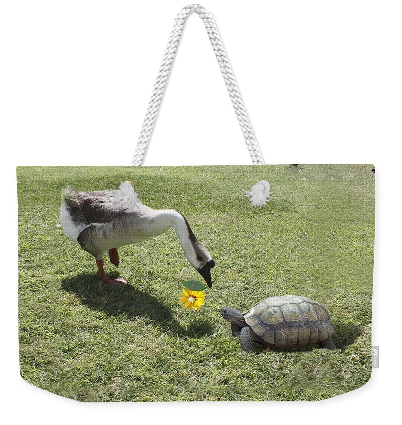 Bff Weekender Tote Bag featuring the photograph The Turtle And The Goose by Gravityx9  Designs