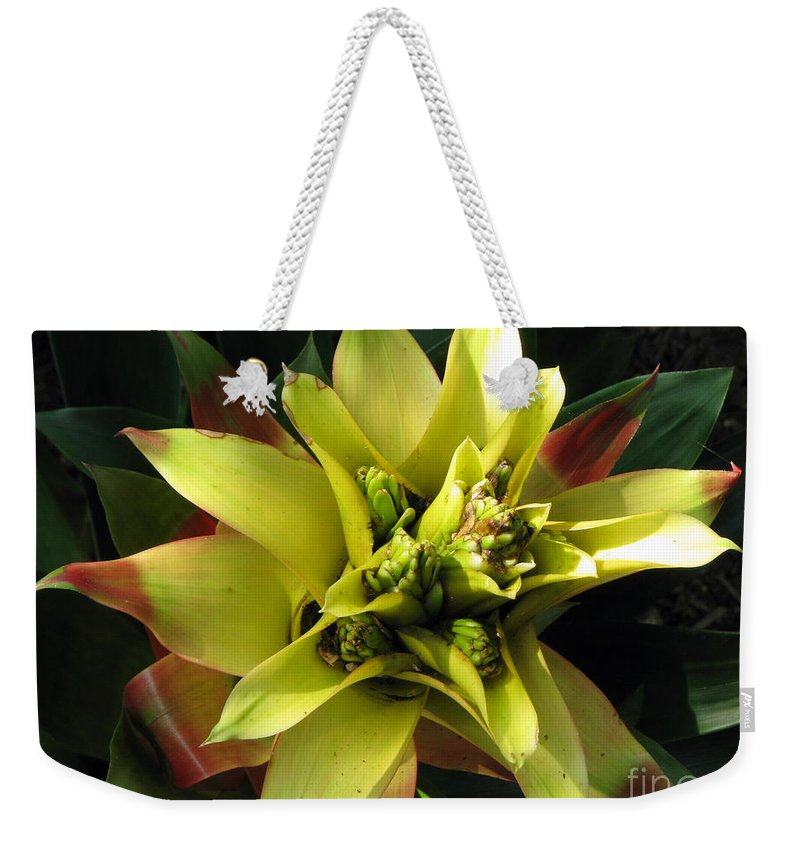 Tropical Weekender Tote Bag featuring the photograph Tropical by Amanda Barcon