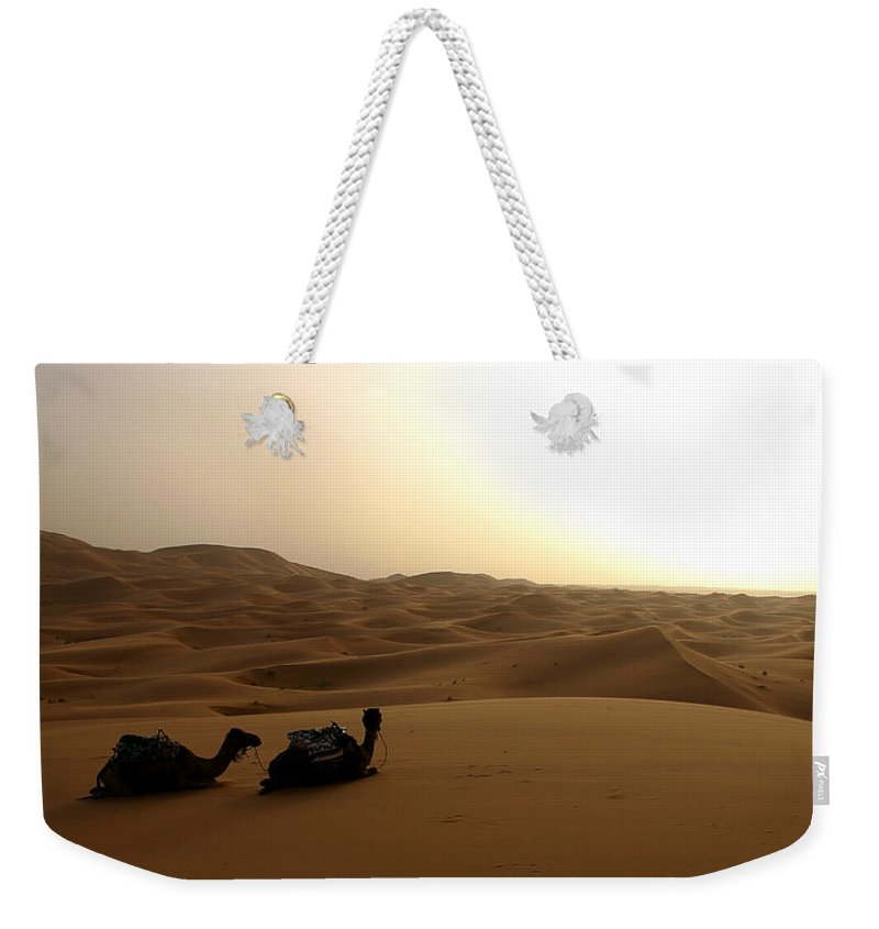 Camel Weekender Tote Bag featuring the photograph Two Camels At Sunset In The Desert by Ralph A Ledergerber-Photography