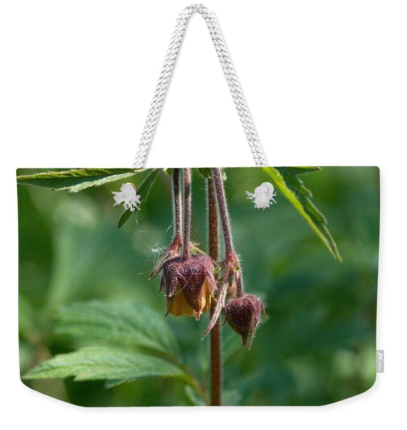 Lehtokukka Weekender Tote Bag featuring the photograph Water Avens by Jouko Lehto