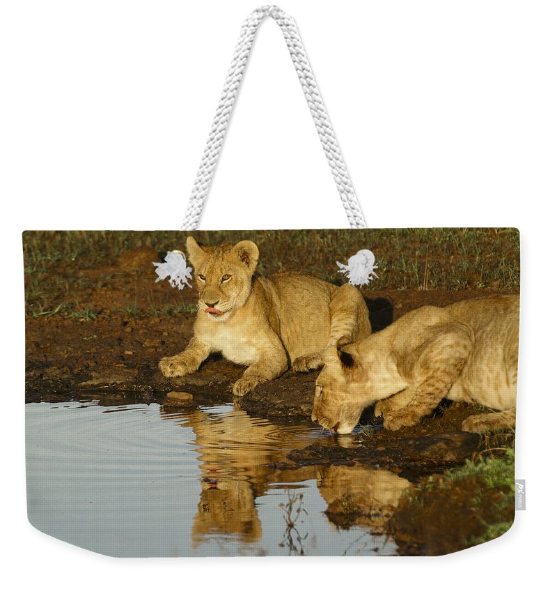 Lion Weekender Tote Bag featuring the photograph We're Thirsty by Michele Burgess