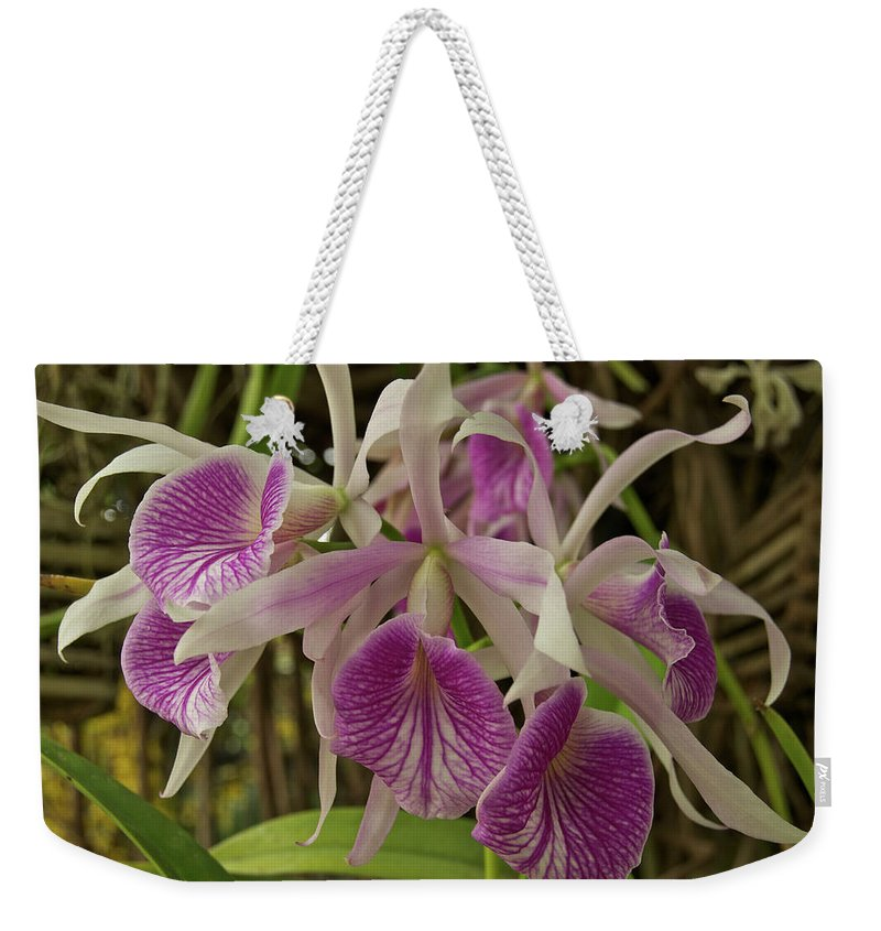 Orchids Weekender Tote Bag featuring the photograph White And Purple Orchids by Michael Peychich