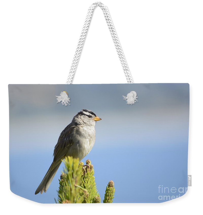 White-crowned Weekender Tote Bag featuring the photograph White-crowned Sparrow by Marv Vandehey