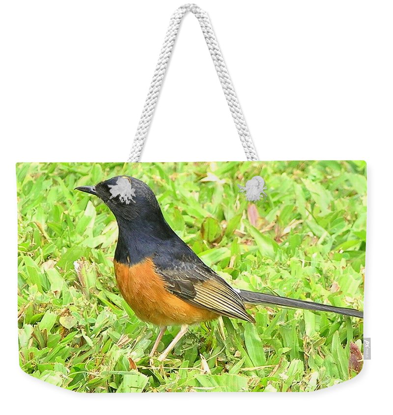 Black Weekender Tote Bag featuring the photograph White-rumped Shama by Mary Deal