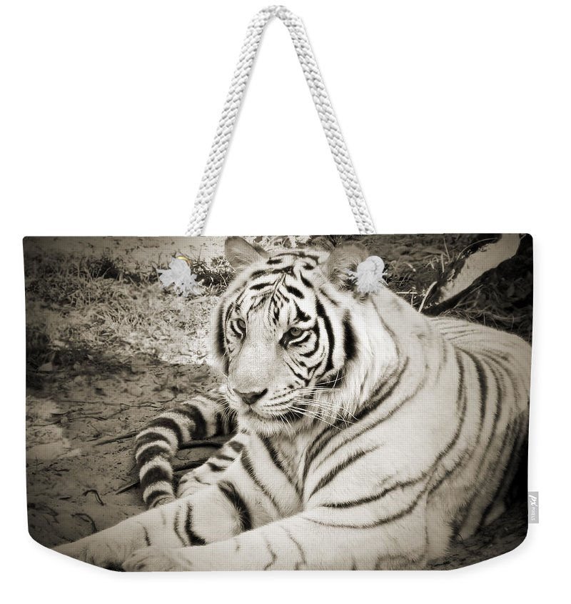 Whiter Tiger Weekender Tote Bag featuring the photograph White Tiger by Steven Sparks