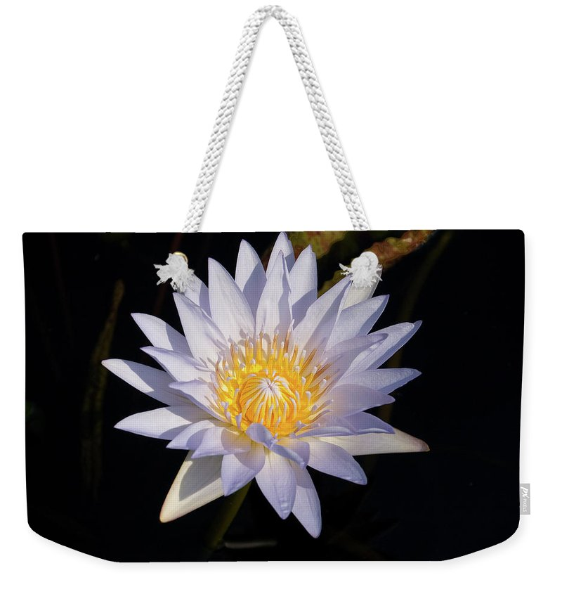 Water Lily Weekender Tote Bag featuring the photograph White Water Lily by Steve Stuller