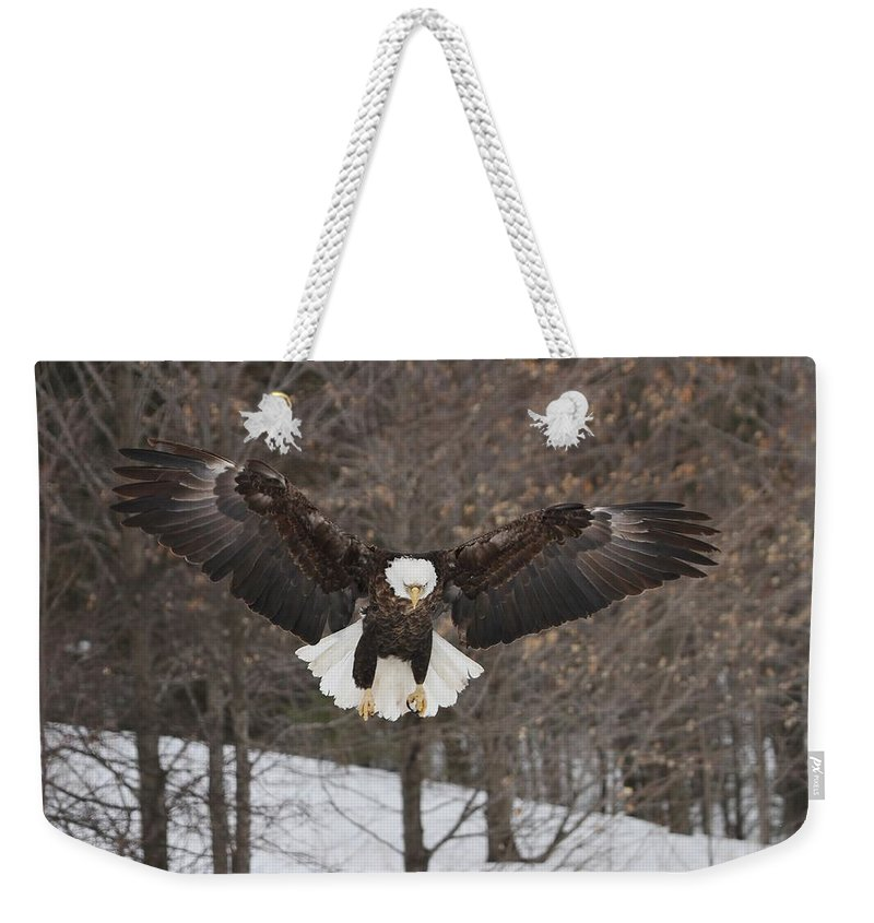 Bald Eagle Weekender Tote Bag featuring the photograph Wings Of Wonder by Teresa McGill