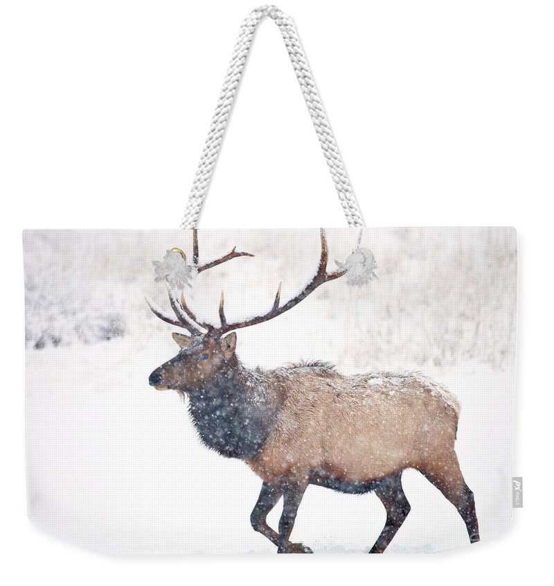 Elk Weekender Tote Bag featuring the photograph Winter Bull by Mike Dawson