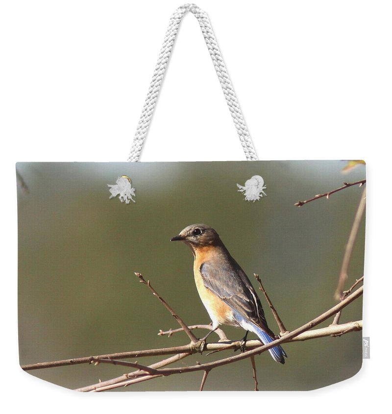 Bluebird Weekender Tote Bag featuring the photograph 105319 - Bluebird by Travis Truelove