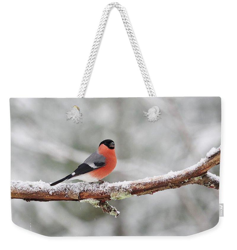 Finland Weekender Tote Bag featuring the photograph Eurasian Bullfinch In Winter by Jouko Lehto