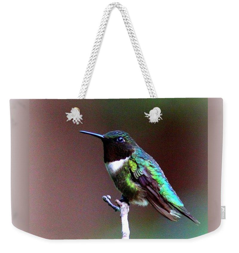 Hummingbird Weekender Tote Bag featuring the photograph 1281 - Hummingbird by Travis Truelove