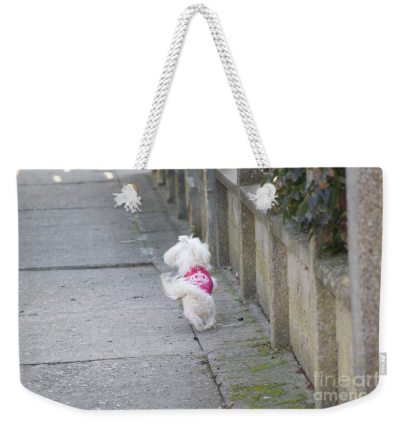 Dog Weekender Tote Bag featuring the photograph My Small Dog by Elvira Ladocki